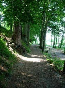 Shannon River Walk Through Forest